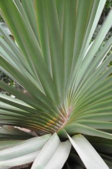 Nützlicher Schraubenbaum