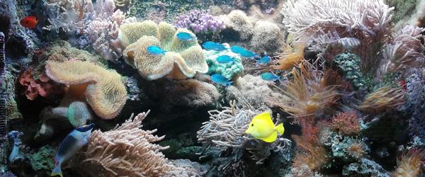 Meerwasser-Aquarium