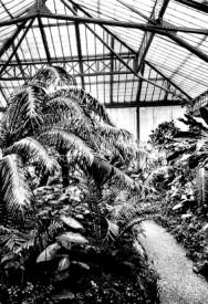 Palmenhaus vor 1945