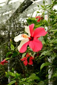 Pflanzenfoto allgemein