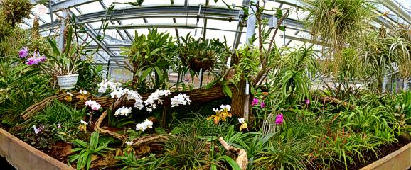 Panorama Orchideenhaus